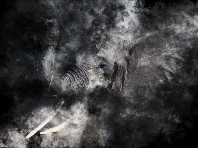 elephant-evaporation-400x300 Evaporate Style | Wallpaper Prints